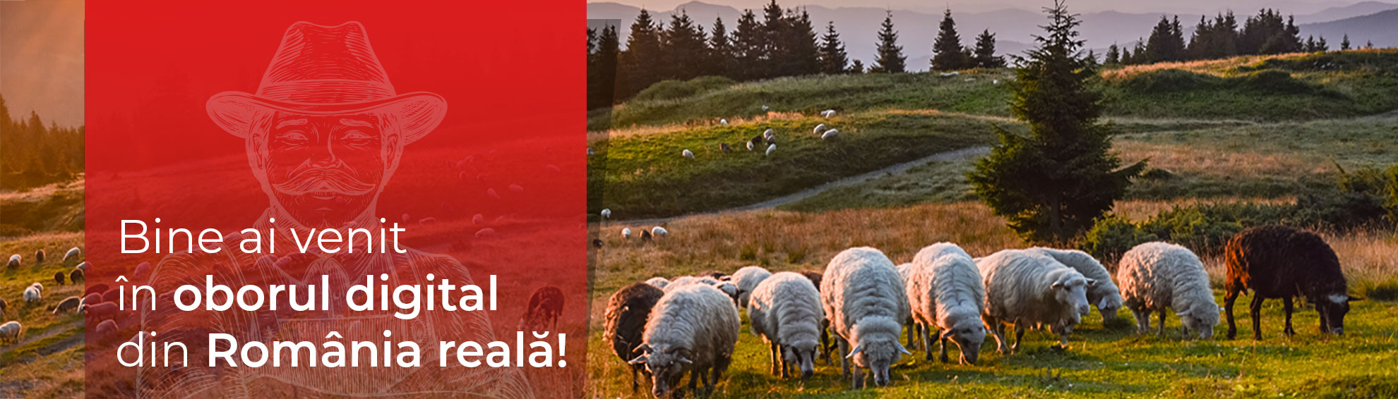 Bine ai venit în oborul digital din România reală!